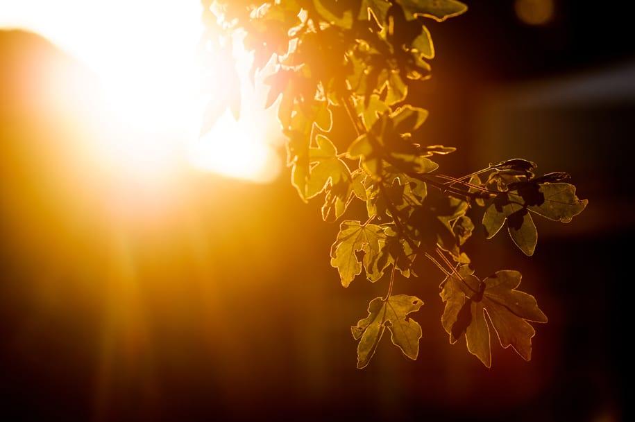 Evening sunshine at Ridge Farm