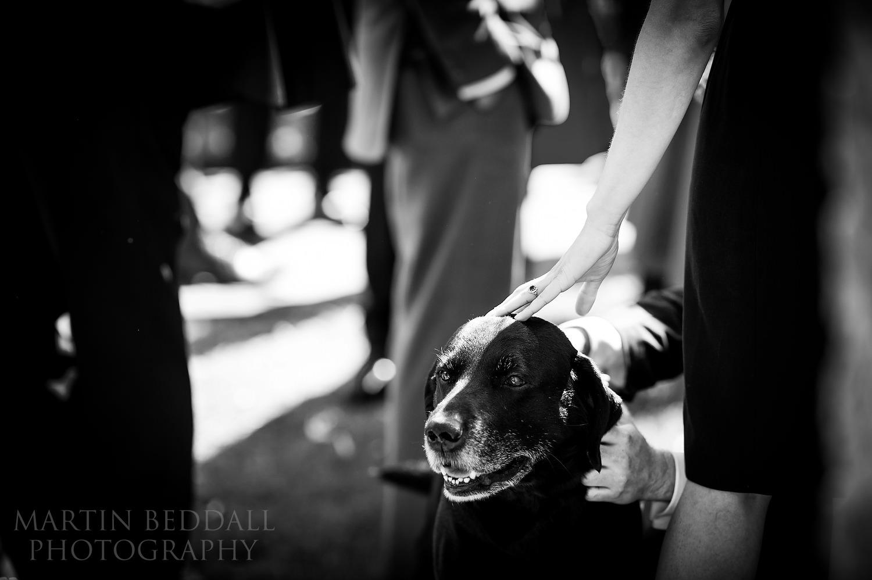Dog at the wedding reception