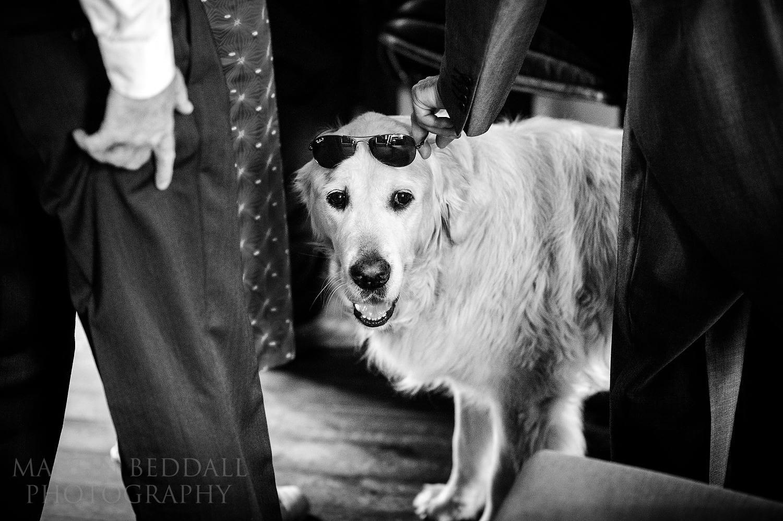Sunglasses on the pub dog