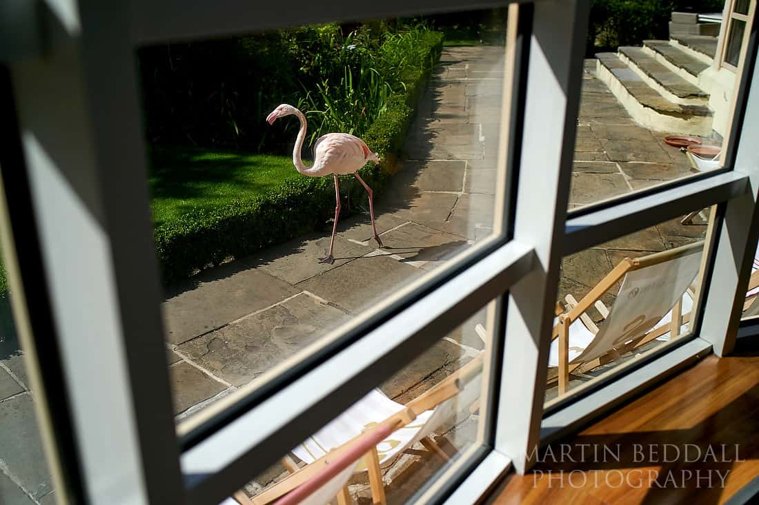 Flamingo at Kensington Roof Gardens