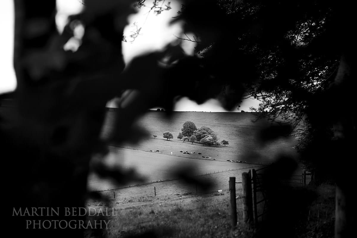 Landscape at Cissbury Barns